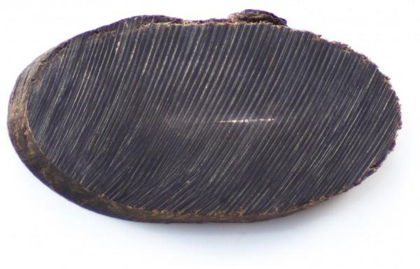 Büffelhorn, Scheibe (schwarz) Naturhornstück